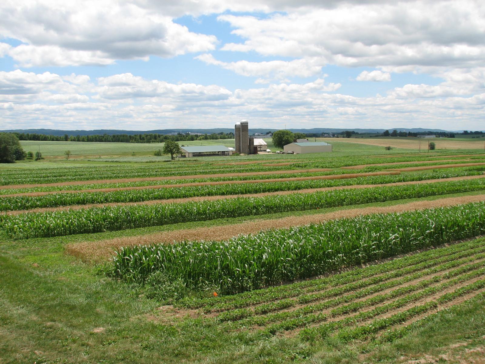 rodale farming systems fields
