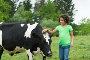 young girl with a cow
