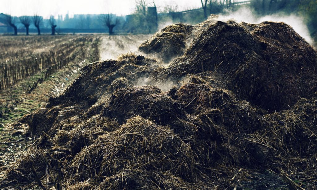 steaming compost pile