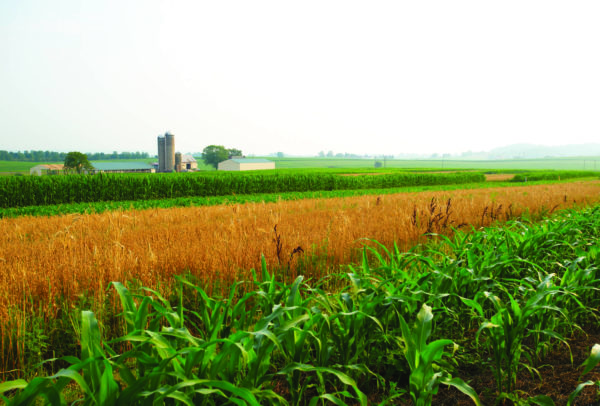 strips of different crops