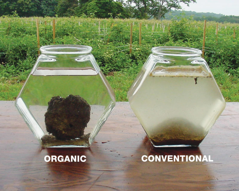 organic soil sample vs conventional sample