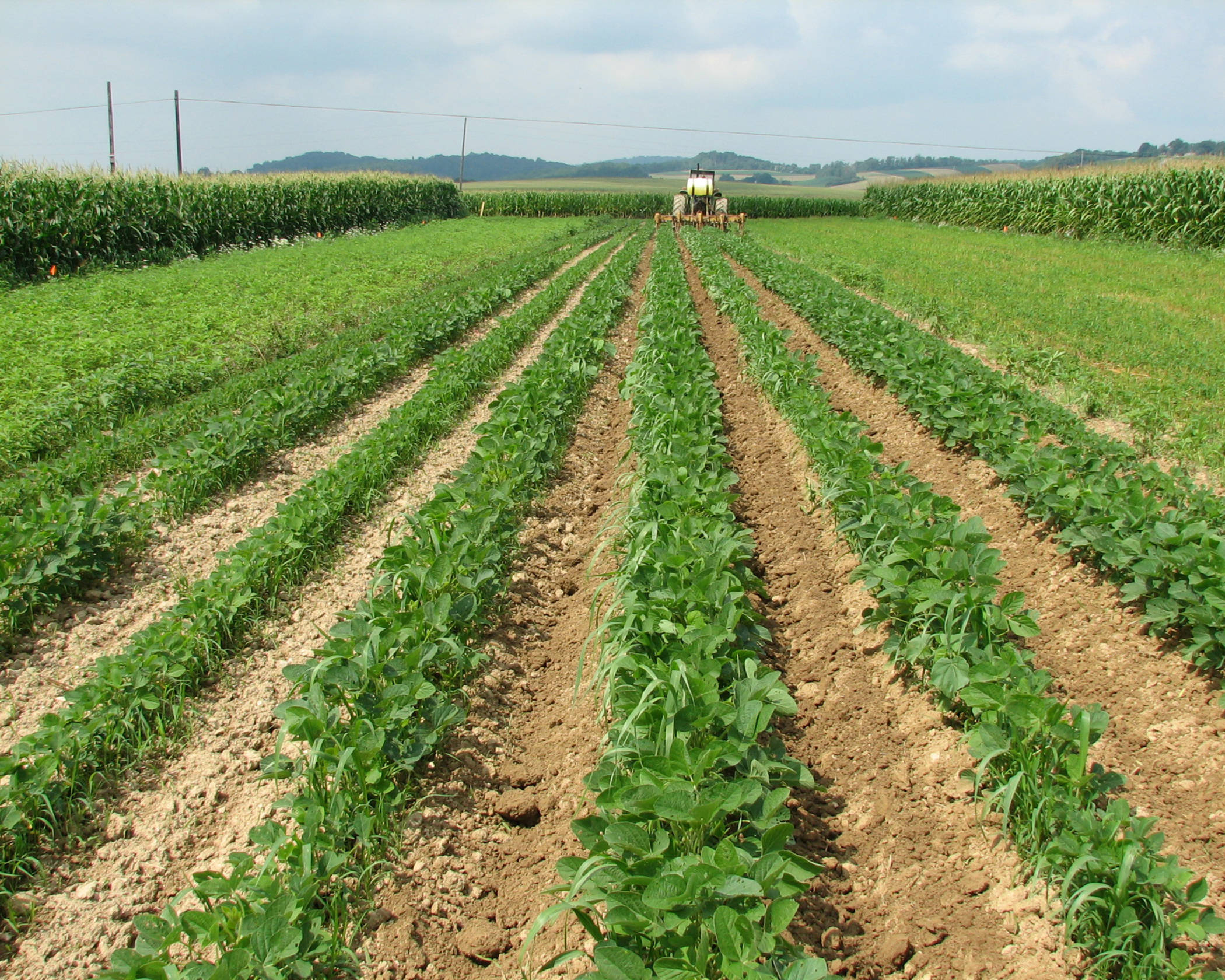 rodale soybean crop