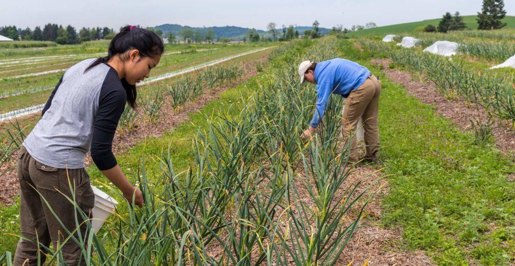 farmers picking plants