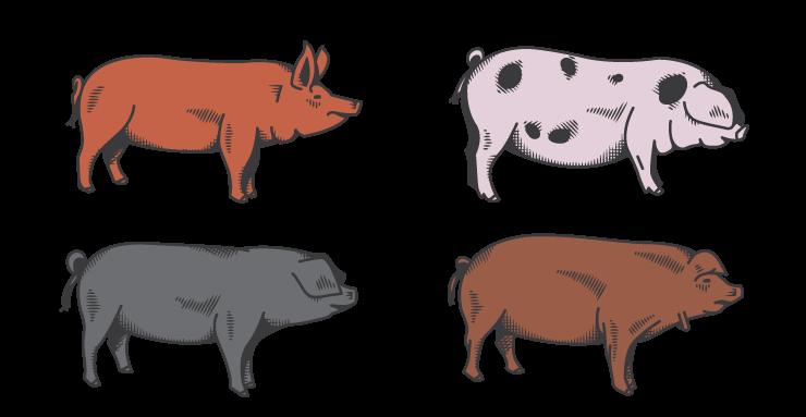 hog heritage breeds