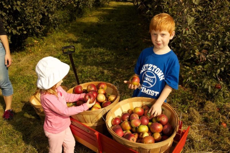 kids standing with baskets of organic apples