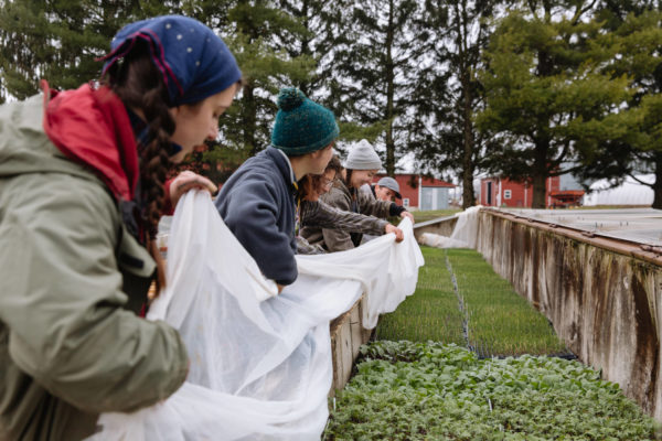 organic farmers tending crops