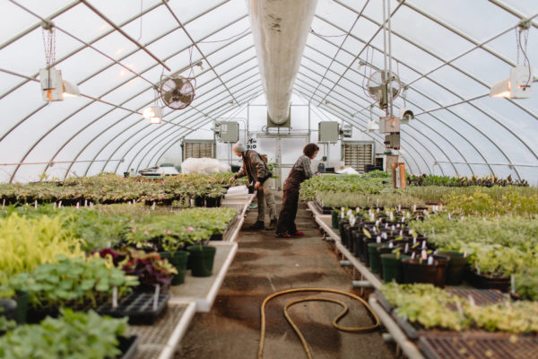 organic farmers in greenhouse