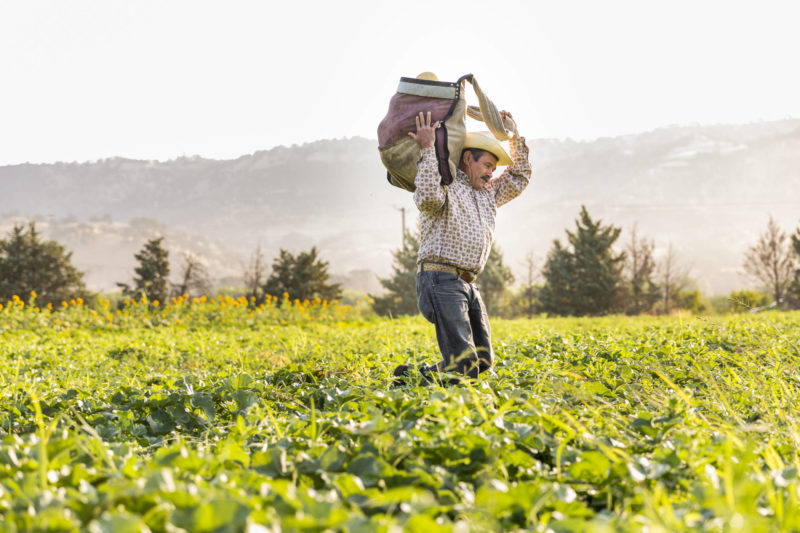 organic farmer carries in the harvest
