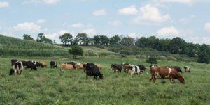 rodale organic pastured animals