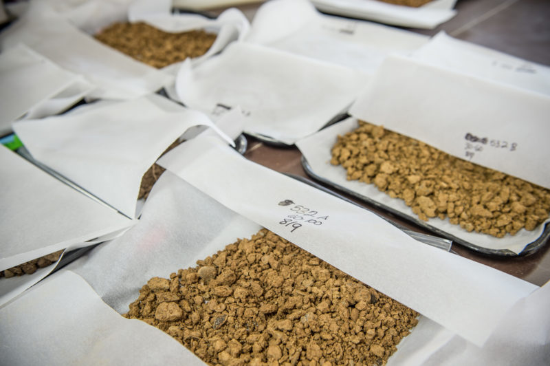 soil samples dry in the lab at Rodale Institute