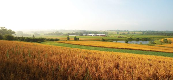 rodale institute farm and crops during harvest season