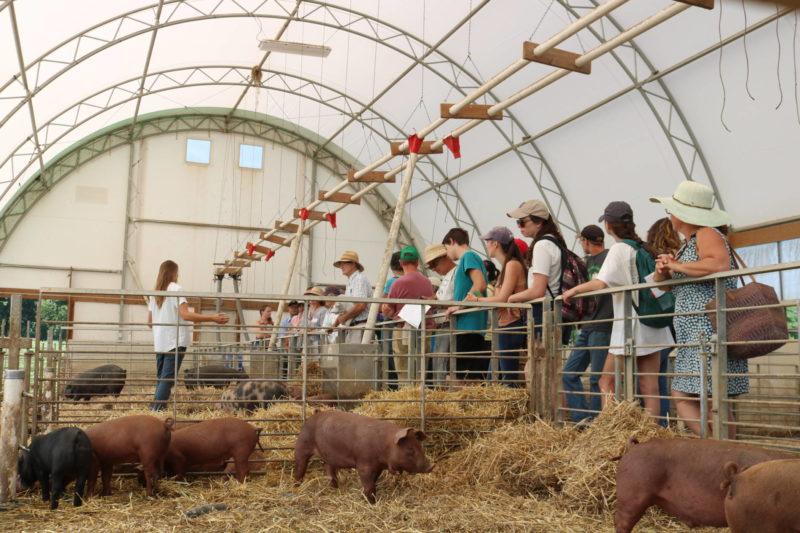 养猪场之旅