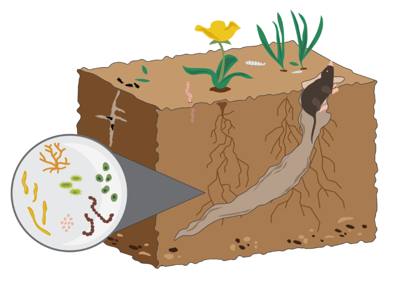 soil is alive graphic