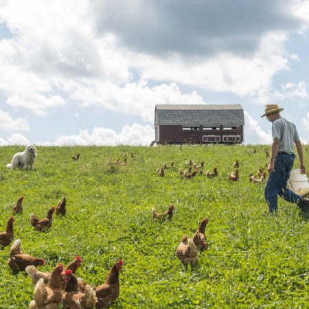 farmer and his chickens