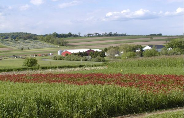cover-crops