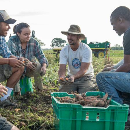 los aprendices aprenden durante la cosecha
