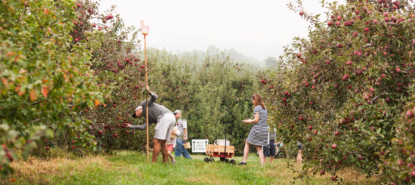 rodale apple fest picking