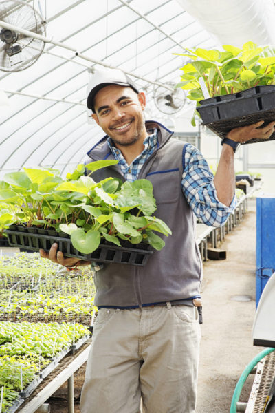 Farmer trainee carries trays of young plants out of the greenhouse