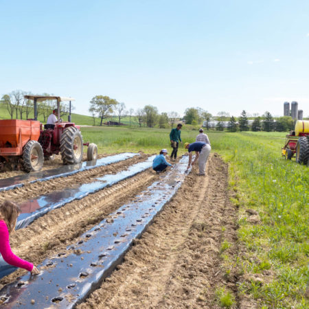 farmers tending to organic crops