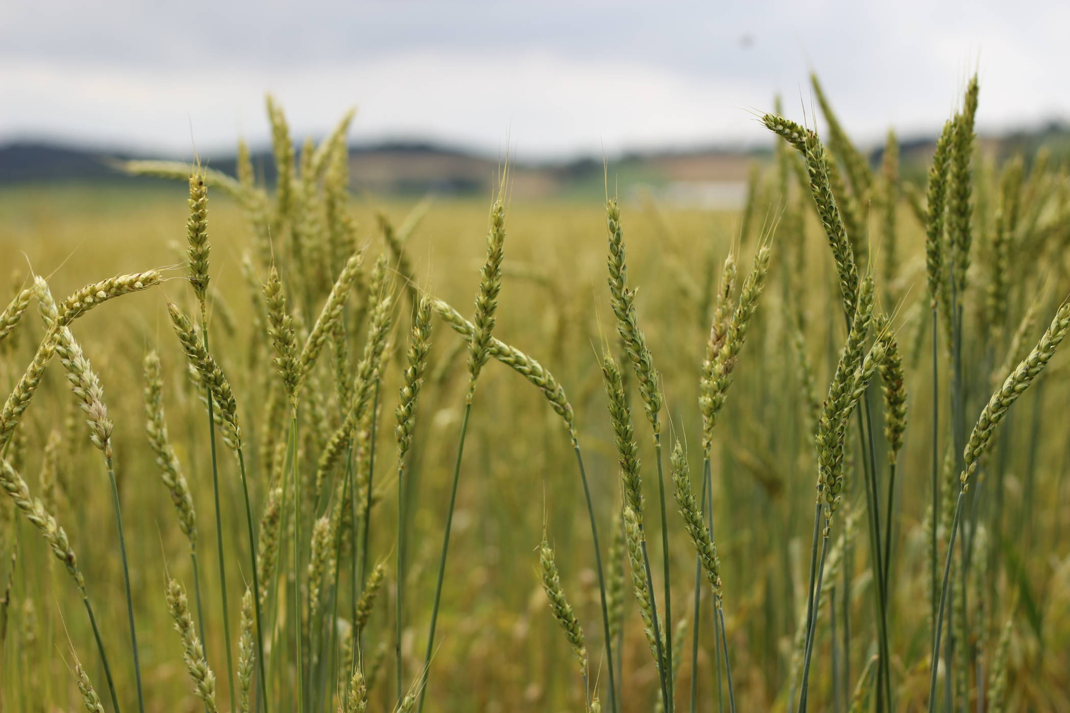 Organic Farmers Association Internship - Rodale Institute