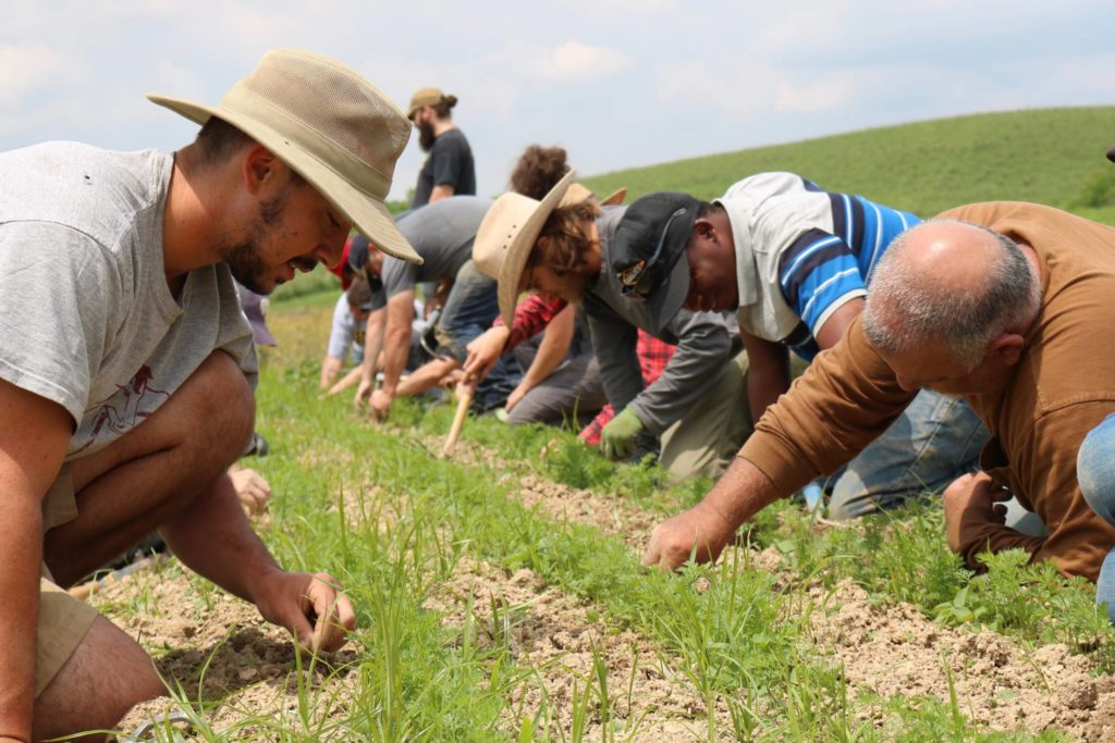 checking the soil
