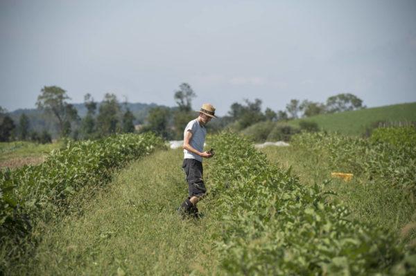 rodale organic farmer