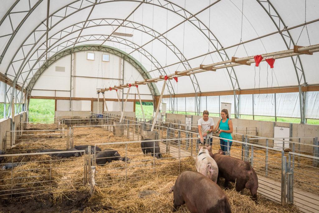 rodale hog facility