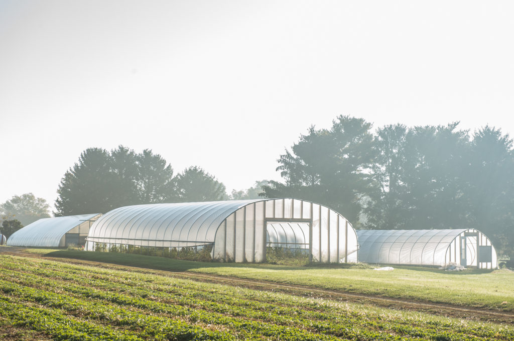 rodale greehouses