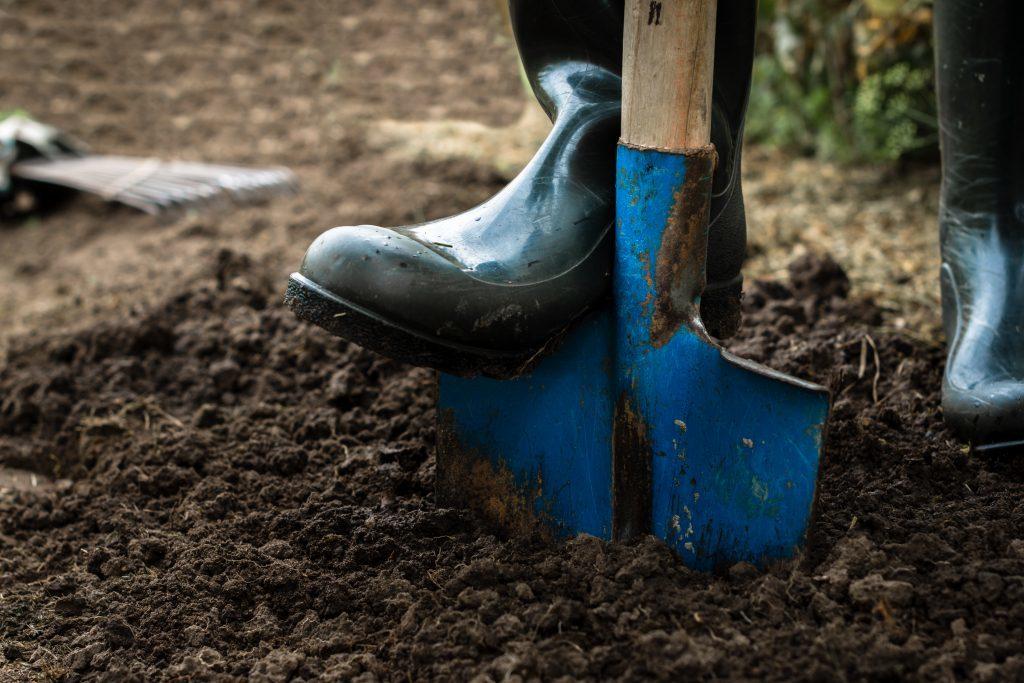 shovel digs into healthy organic soil