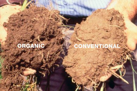 有机土壤和常规土壤并排